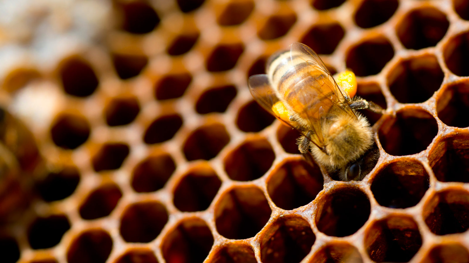 Blog - What Beekeeping Taught Me About Digital Leadership