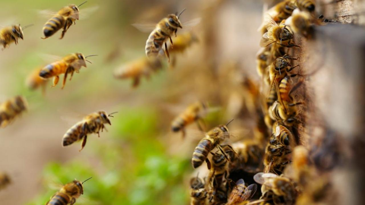 What beekeeping taught me about digital leadership